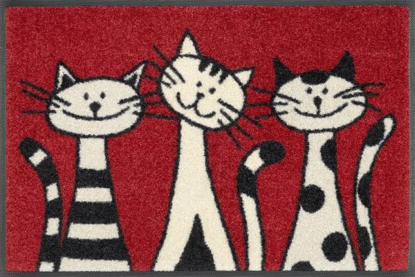 Sauberlaufmatte Three Cats, wash & dry Design, 40 x 60 cm, Draufsicht